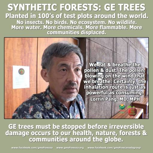 GE Forests